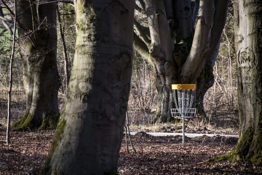 disc golf basket in some brush, surrounded by tall trees
